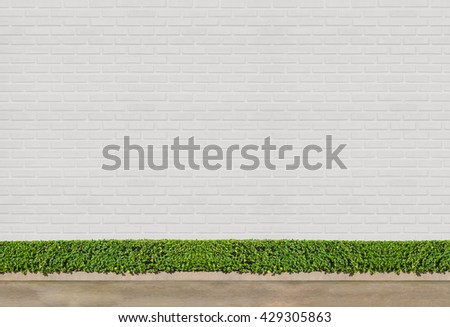 white brick wall concept : Green Bushes fences at white brick wall background with concrete floor at walk way - stock photo