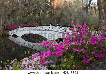 White bridge and azaleas at the Magnolia Plantation in Charleston, SC. - stock photo