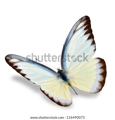 White Butterfly flying  isolated on white background, Soft shadow underneath. - stock photo
