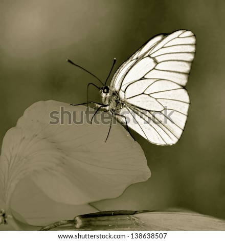 White butterfly on a flower peony (stylized retro) - stock photo