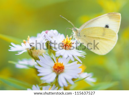 White Butterfly on white flower / monarch - stock photo