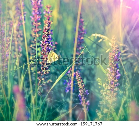 White butterfly on wild flower (purple flower) - stock photo