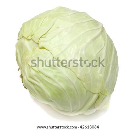 White cabbage on white. Isolated. - stock photo