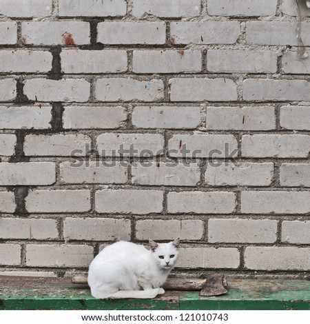 white cat and axe with wooden handle  on the green bench - stock photo