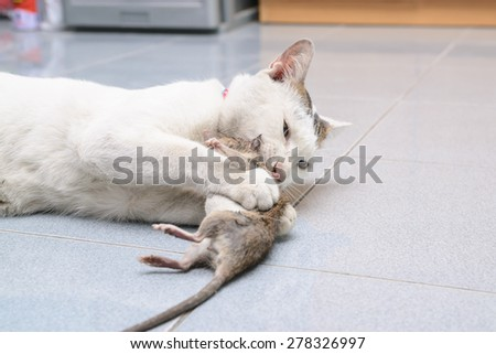 White cat catching and biting mouse, rat in the house - stock photo