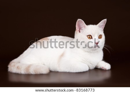 White cat head on brown background - stock photo