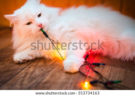 white cat licks and sniffs christmas colorful garland - stock photo