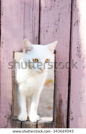 White cat look through window in wooden fence - stock photo