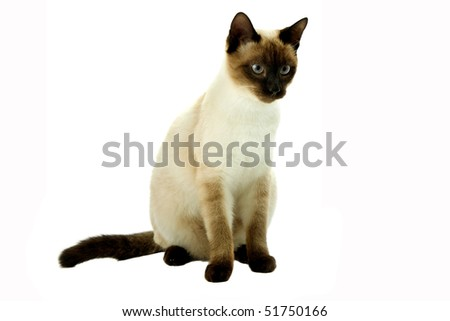 white cat looking right. On a white background - stock photo