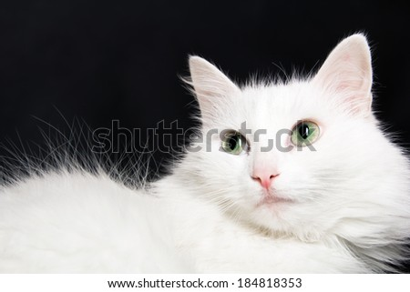 White cat on dark background - stock photo