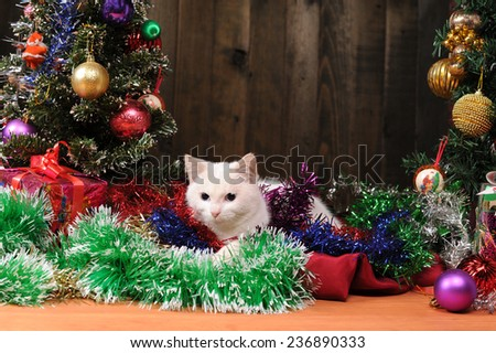 White cat playing next to decorated Christmas tree - stock photo