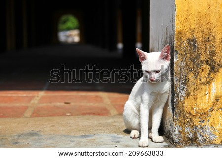 White cat resting outside - stock photo