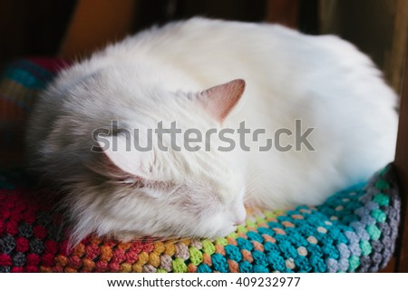 White cat sleeping on the knit colorful plaid. Selective focus. With shallow depth of field. Edited with film filter.  - stock photo