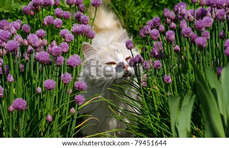 white cat sniffing a flower in the garden - stock photo