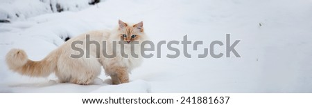 White cat trudges through the snow - stock photo