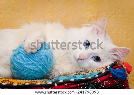 White cat with blue eyes. Shallow depth of field  - stock photo