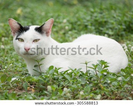 White Cat with Small Black Spots on Its Ears  Laying on Grass - stock photo
