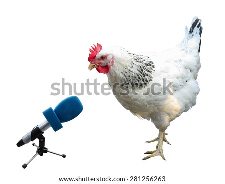 White chicken with microphone isolated over white background - stock photo