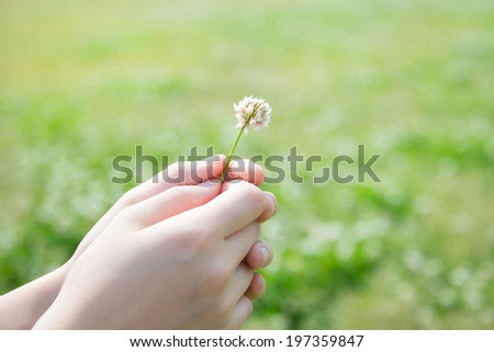White Clover Held by Young Girl's Hand  - stock photo