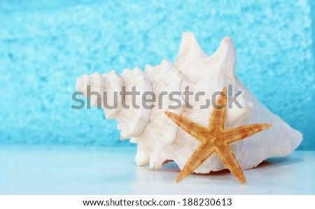 White conch shell and starfish against aqua background   - stock photo