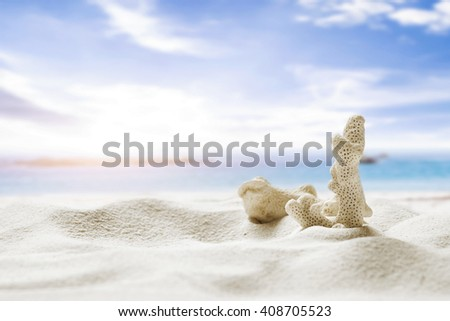 White coral on the sand beach with copy space and blue sky. Summer concept. - stock photo