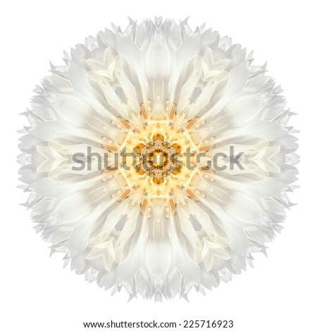 White Cornflower Mandala Flower. Kaleidoscope of Centaurea cyanus Isolated on White Background. Beautiful Natural Mirrored pattern - stock photo