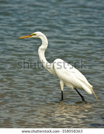 White Crane - stock photo