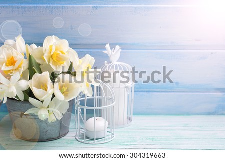 White daffodils and tulips  flowers in bucket  in ray of light  on turquoise  painted wooden planks against blue wall. Selective focus. Place for text.  - stock photo
