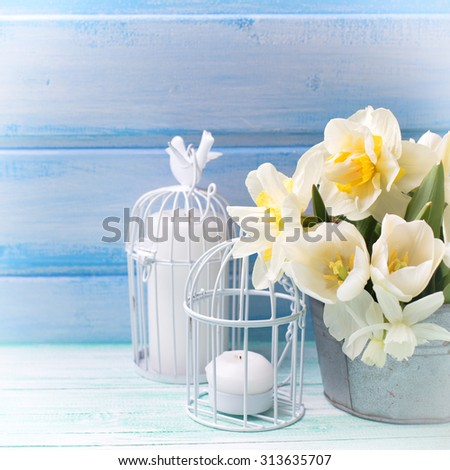 White daffodils and tulips  flowers in bucket  on turquoise  painted wooden planks against blue wall. Selective focus. Place for text. Square image. - stock photo