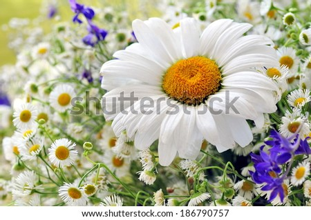 White daisies background  - stock photo