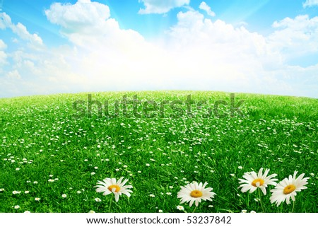 White daisies,blue sky and sun. - stock photo