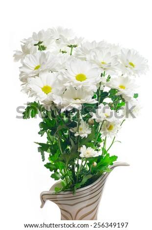 White daisies isolated on white background - stock photo