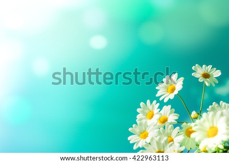 White daisy flowers against the blue sky - stock photo