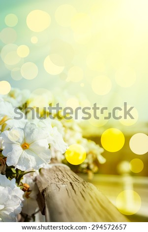White delicate flowers grow on the balcony railing . summer, the sun's rays . in the background the city. toned photo . Optical focus on the flower . Photo Postcard - stock photo
