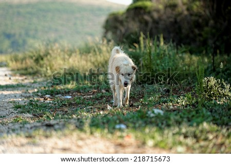 White dog outside on the path running - stock photo