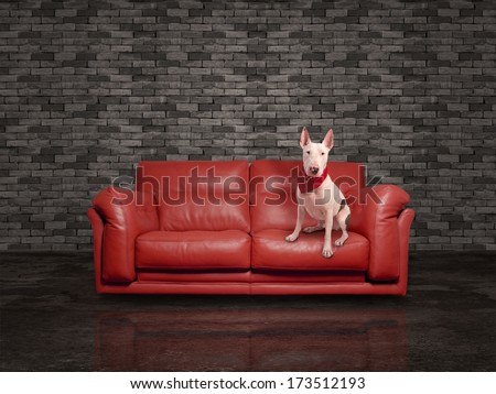white dog over leather red sofa - stock photo
