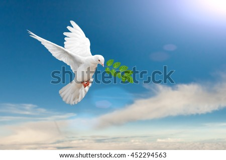 White Dove carrying leaf branch on blue sky background - stock photo