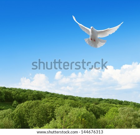 White dove flying in the sky above forest - stock photo