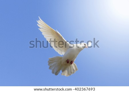 White dove flying on a background of blue sky, a symbol of peace and harmony, bible bird - stock photo