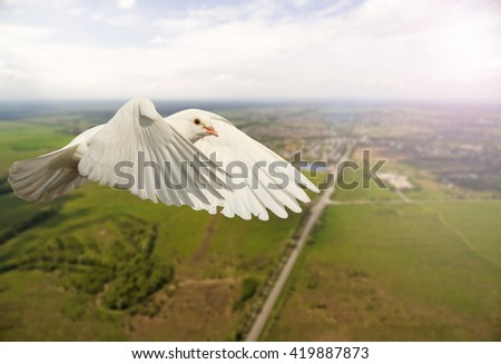 white dove flying over the city and the road, the bird is good news, white wings with sunny hotspot - stock photo
