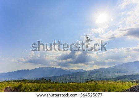 White dove flying to light - stock photo