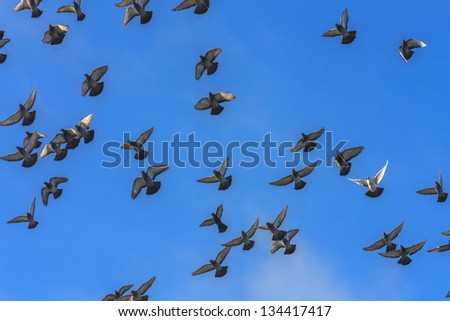 White doves and pigeons in flight, blue sky background - stock photo