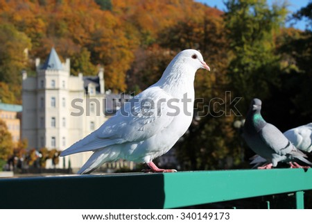 White doves on bridge - stock photo