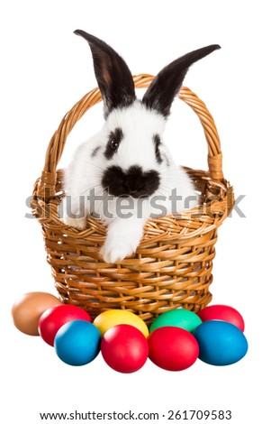 White Easter Bunny in a basket on a white background - stock photo
