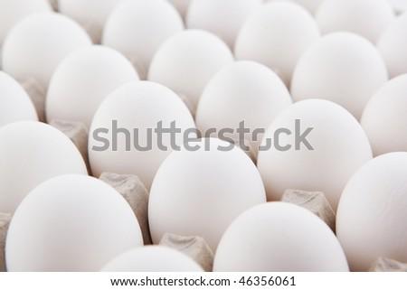 white eggs row - stock photo