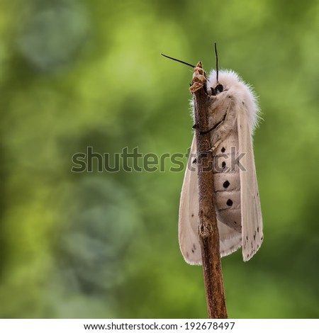 White Ermine with a beautiful background - stock photo