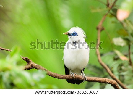 White exotic bird on a branch  - stock photo