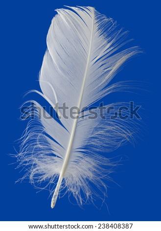 White Feather Isolated on Blue Background - stock photo