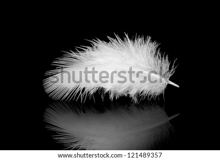 white feather on a black with reflection - stock photo