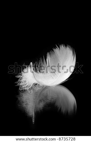 white feather with reflection on black background - stock photo